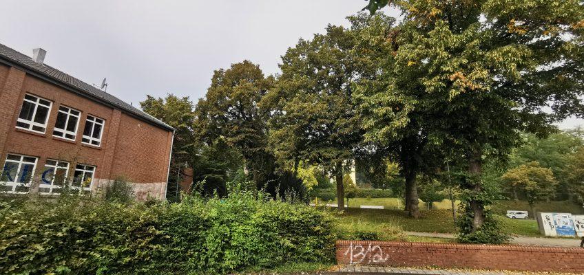 Mehr Linden am Herrenwingert erhalten – Planung für Baustraße kann verbessert werden
